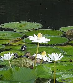 Good Day Images, Lotus, Animiertes Gif, Coffee Images, Bird Gif, Cinemagraph, Love Phrases, Nature Animals, Science And Nature