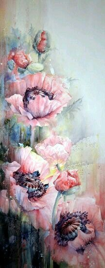 Pink Iceland poppy's