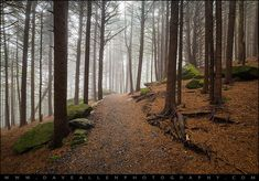 Appalachian Trail Landscape Photography in Western North Carolina - Fog rolls through the trees along the Appalachian Trail in the Roan Mountain Highlands of western North Carolina and eastern Tennessee.