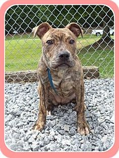 Act quickly to adopt PRISSY. Pets at this shelter may be held for only a short time.