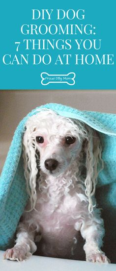 The ultimate homemade dog shampoo recipe bully max pinterest diy dog grooming 7 things you can do at home solutioingenieria Gallery