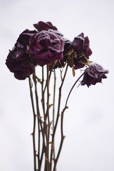Black Forest Luxe – the Dark Side of the Wedding World