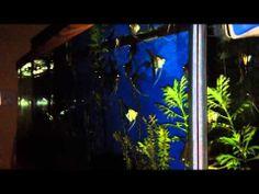 Arduino controlled Aquarium - YouTube