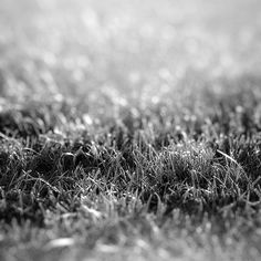 Papers.co wallpapers - nd17-lawn-flower-dark-bw-bokeh-nature - http://papers.co/nd17-lawn-flower-dark-bw-bokeh-nature/ - bokeh, flower
