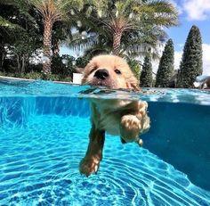 Super Cute Puppies, Cute Baby Dogs, Cute Little Puppies, Cute Dogs And Puppies, Doggies, Funny Puppies, Photos Of Puppies, Puppies With Babies, Cute Puppy Pics