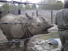 Rhino at the Toronto Zoo