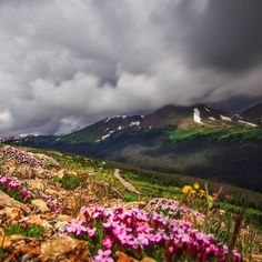 Mountain peaks and fields of wildflowers on the Ute Trail in the Rocky Mountain National Park in Colorado    U.S. Department of the Interior @usinterior Instagram photos | Websta