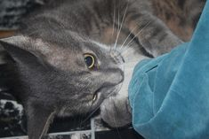 No more cat urine everywhere! - cats #cats#cat #spraying