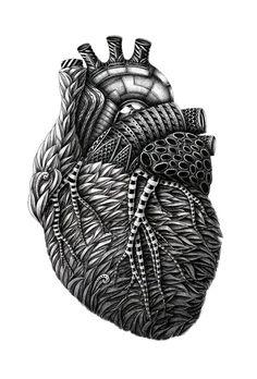 Gravure illustration, illustration art, tatoo art, grafic design, anatomy a Illustration Arte, Gravure Illustration, Ink Illustrations, Arte Com Grey's Anatomy, Anatomy Art, Human Anatomy, Heart Anatomy, Anatomy Drawing, Greys Anatomy