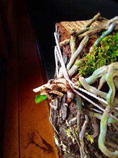 Реанимация ОРХИДЕИ/ orchid rehabilitation