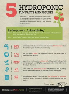 The Five Things to Know about Hydroponics [infographic]