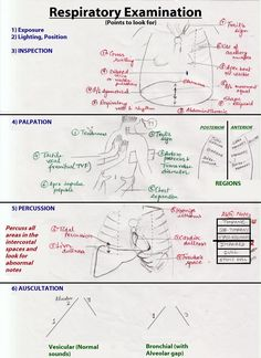 Auscultation Of Lungs Sounds Google Search Nursing