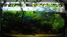 Aquarium Hauptansicht von Trichogaster chuna´s Playground