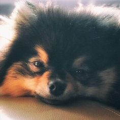 """ruby on Twitter: """"how to trigger yeontan stans… """""""