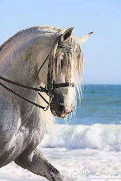 white horse and sea