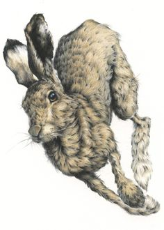 Rabbit by Vanessa Foley Illustrations, Illustration Art, Somebunny Loves You, Rabbit Art, Jack Rabbit, Bunny Art, Color Pencil Art, Wildlife Art, Animal Drawings