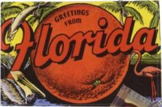 vintage florida postcard Florida Girl, Vintage Florida, Florida Travel, Indialantic Florida, Vintage Labels, Vintage Postcards, Vintage Maps, Flo Rida, Sunshine State