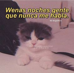 Cute Cat Memes, Funny Memes, Reaction Pictures, Funny Pictures, Mexican Moms, Frases Tumblr, Cartoon Memes, Free Anime, Funny Love