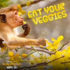 Happy Eat Your Vegetables Day! Monkey Kingdom, Disney Movies Anywhere, Natural Wonders, Habitats, Movie Stars, Documentaries, Eat, Nature, Activities