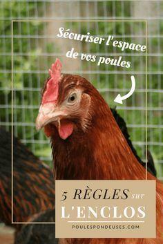 #astuces #enclos #poules