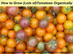 How to Grow Tomatoes Organically - From planting to harvest, 8 simple steps to Homegrown Tomatoes Without Chemicals, plus Innovative Gardening Techniques