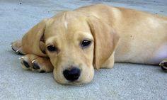 Benny the Mixed Breed puppy