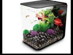 The BiOrb FLOW fish tank is the latest BiOrb aquarium. Very simple to set up and maintain.