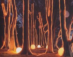 Landscape illuminated by trees delineated with ropes of fluorescent lightning photographed by Tim Walker Light Art Installation, Light Painting, Painting Trees, Tree Lighting, Landscape Lighting, Mellow Yellow, Public Art, Event Design, Graffiti