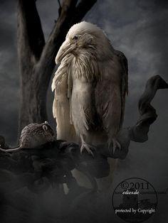 White raven, friend or foe?