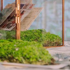 preserved moss Moss Garden, Garden Planters, Moss Centerpieces, Moss Terrarium, Moss Wall, Cute Frames, Beautiful Fairies, Enchanted Garden, Garden Gifts