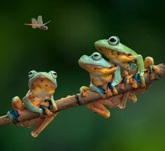 """thelordismylightandmysalvation: """"~ Leap Frogs ~ """""""