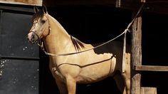 caballo criollo - Argentina - qué belleza!!
