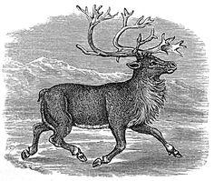 reindeer.jpg (1198×1014)