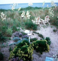 Inspired by the Delaware shore beyond her door, an avid gardener creates harmony from beach-friendly flora. Seaside Garden, Coastal Gardens, Beach Gardens, Gray Gardens, Beach Cottage Style, Coastal Style, Coastal Living, Coastal Decor, Beach House