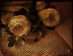 The book and the rose 4