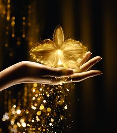 soon on The Beauty Cove the impressive power of a gold orchid. Guerlain and Orchidée Imperial, ten years of exceptional beauty. Butterfly Wallpaper, Nature Wallpaper, Wallpaper Backgrounds, Profile Picture For Girls, Gold Aesthetic, Montage Photo, Angel Pictures, Pretty Wallpapers, Disney Wallpaper
