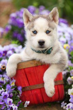 Totally cute!