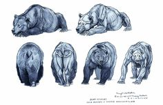Terryl Whitlatch's bear studies for Disney's Brother Bear