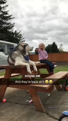 Husky, Omg! I could not stop laughing. This is hilarious!!!