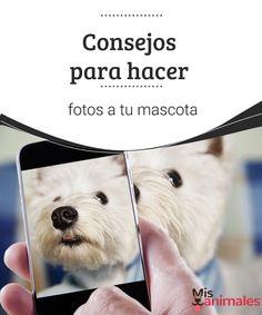 Consejos para hacer fotos a tu mascota En este artículo compartimos los mejores consejos para que aprendas a hacer fotos a tu mascota. ¡Vamos a conocerlos! #fotos #técnicas #mascota #consejos