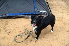 Camping up north Wisconsin with Australian shepherd puppy. Follow @winniemini Instagram