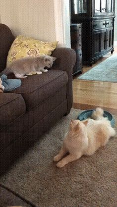 I won this battle. or, why the High Ground is always important Funny Animal Videos, Funny Animal Pictures, Animal Memes, Kittens Cutest, Cats And Kittens, Cute Cats, Animals And Pets, Funny Animals, Cute Animals