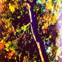 My photo ... Tree life...