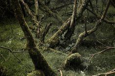 Tranquil shots of Nature in Miren Pastor's 'Bidean'