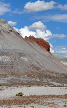 Petrified Forest National Park | Travel | Vacation Ideas | Road Trip | Places to Visit | Petrified Forest Natl Pk | AZ | Science Place | National Park | Nature Reserve | Natural Feature | Hiking Area