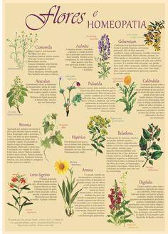 florais de bach cartaz as flores na homeopatia frete grátis