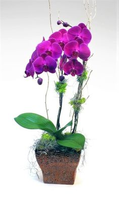 Natural Beauty-A vivid Phalaenopsis orchid seated in a coppery, patterned pot and accented with moss and twigs. Color may vary. Total number of Orchid stems may vary depending on plant. #StadiumFlowers #MardiGras #MardiGrasFlowers