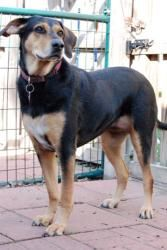Hi.  My name is Gracie.  I've been FORGOTTEN!  I'm a rescue from Hurricane Ike IN 2008!  know I'm not as urgent as some, BUT, I've been living in a KENNEL FOR 5 YEARS NOW. I'm not getting younger. I'm a big dog in a small dog rescue. I WANT A HOME!!!! PLEASE take me home. You can see me at tinypawsrescue.com