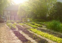 Front yard as of last week lasagna gardening