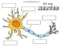 game for children to learn about the neurons! Mount the blank labeling ...